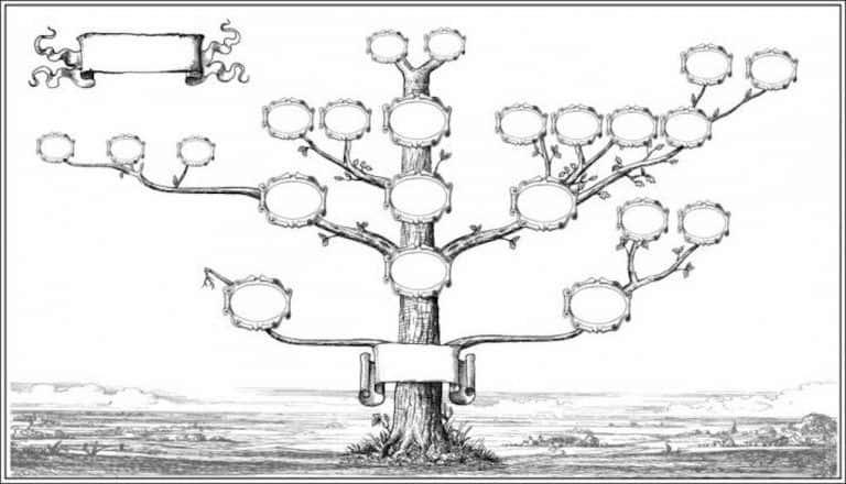 Drzewo genealogiczne – definicje i zasady budowy