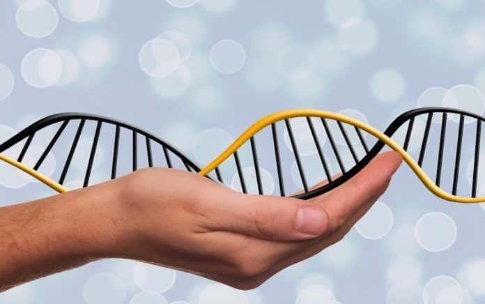genealogia genetyczna