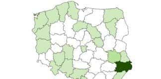 czochra